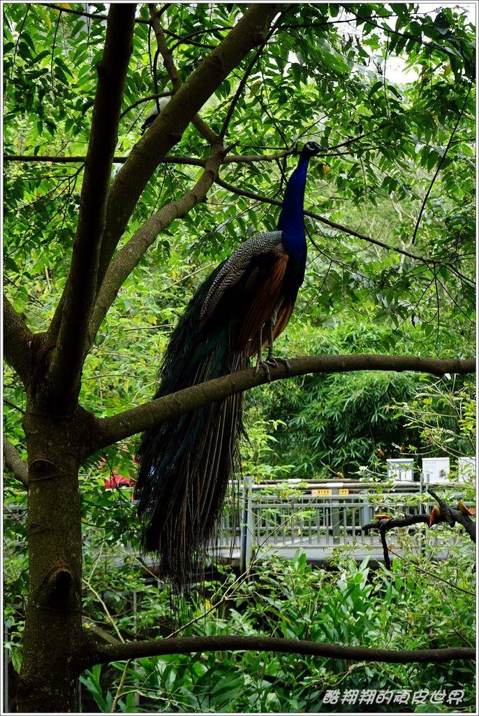 木柵動物園-08.JPG