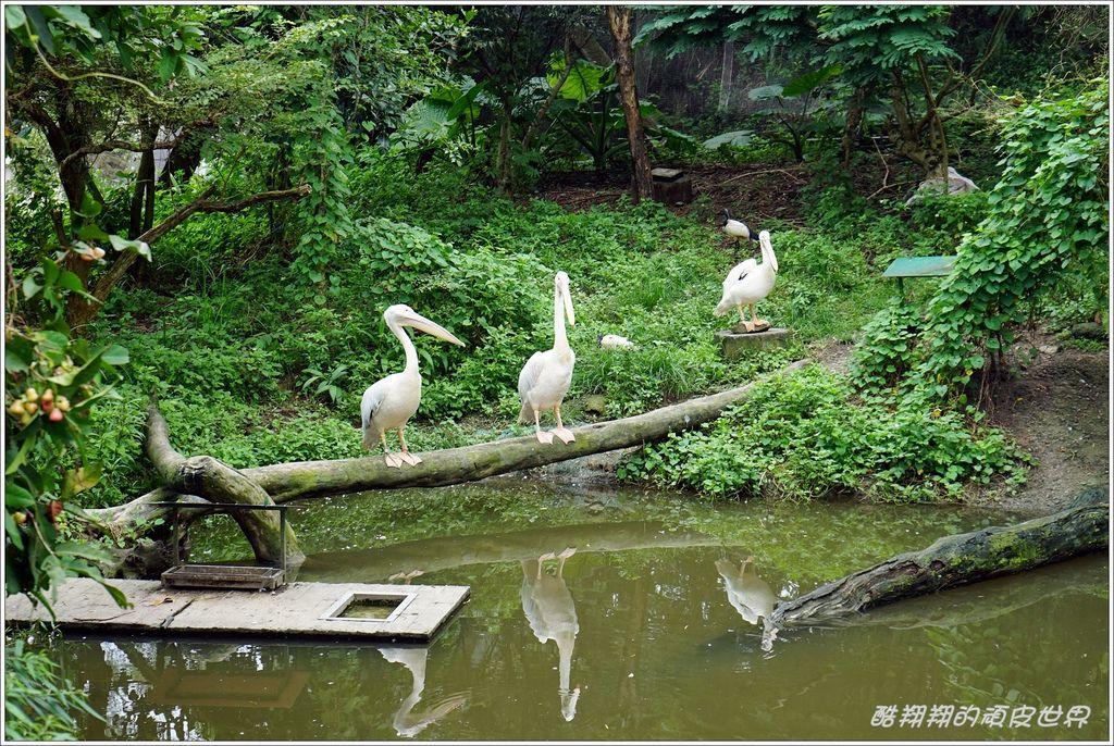 木柵動物園-09.JPG