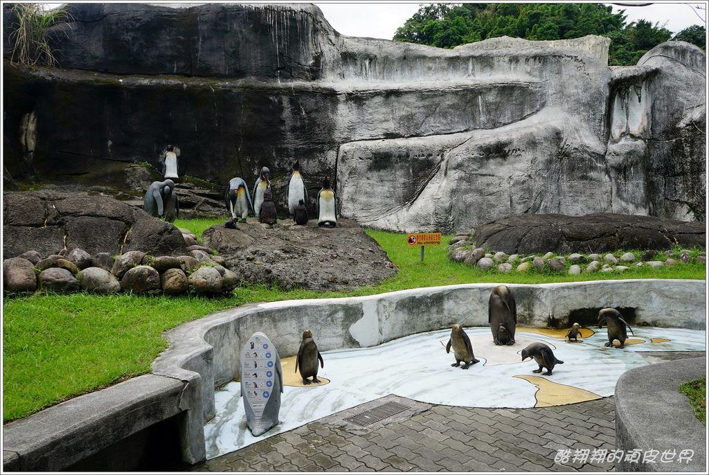 木柵動物園-14.JPG