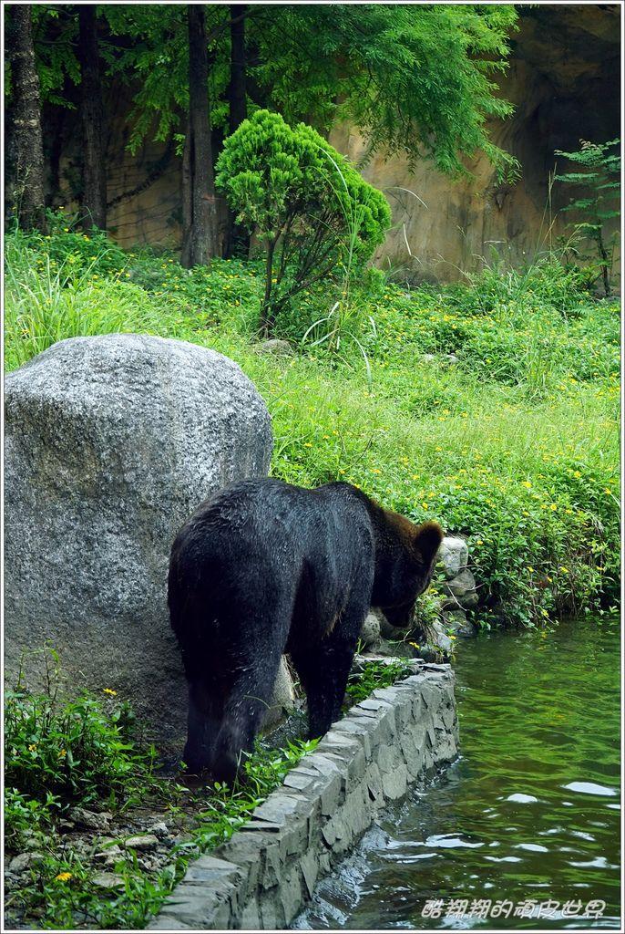 木柵動物園-16.JPG