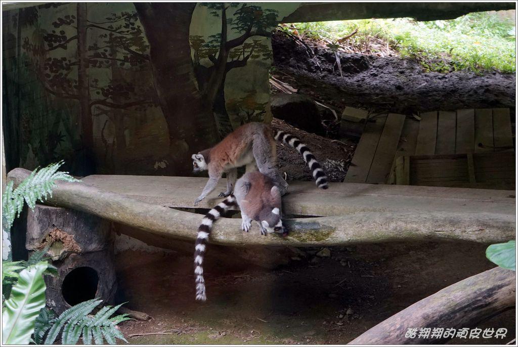 木柵動物園-21.JPG