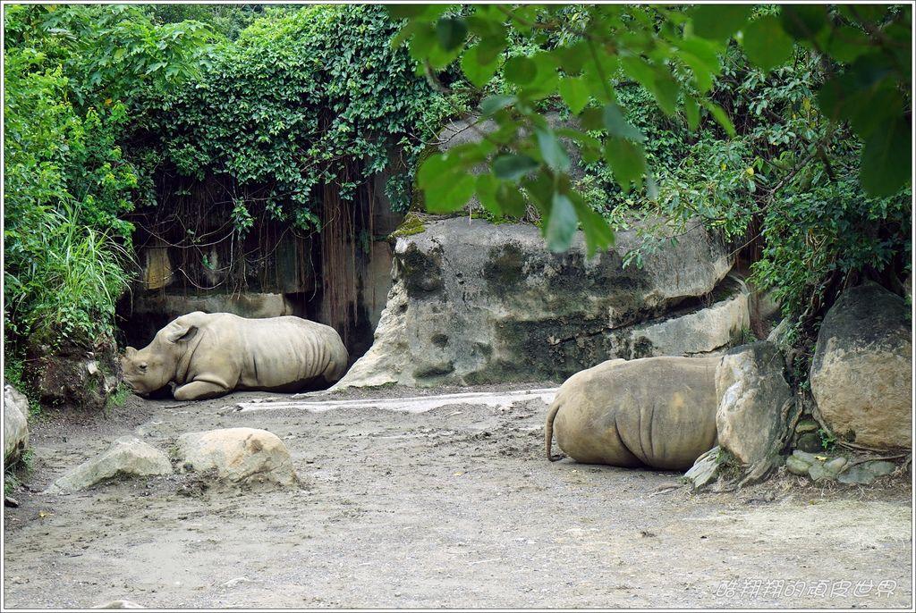 木柵動物園-24.JPG
