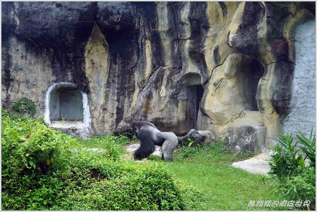 木柵動物園-25.JPG