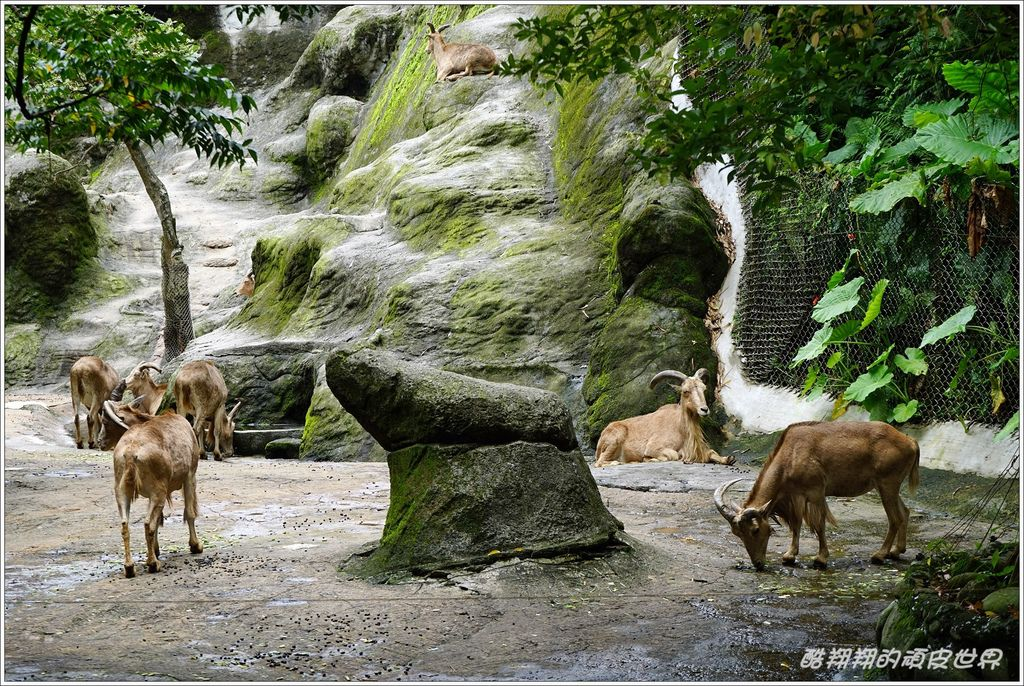 木柵動物園-26.JPG