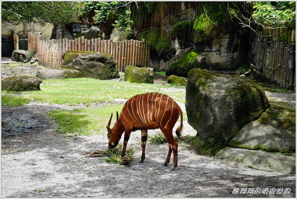 木柵動物園-28.JPG