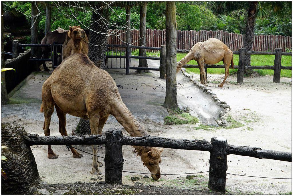 木柵動物園-33.JPG