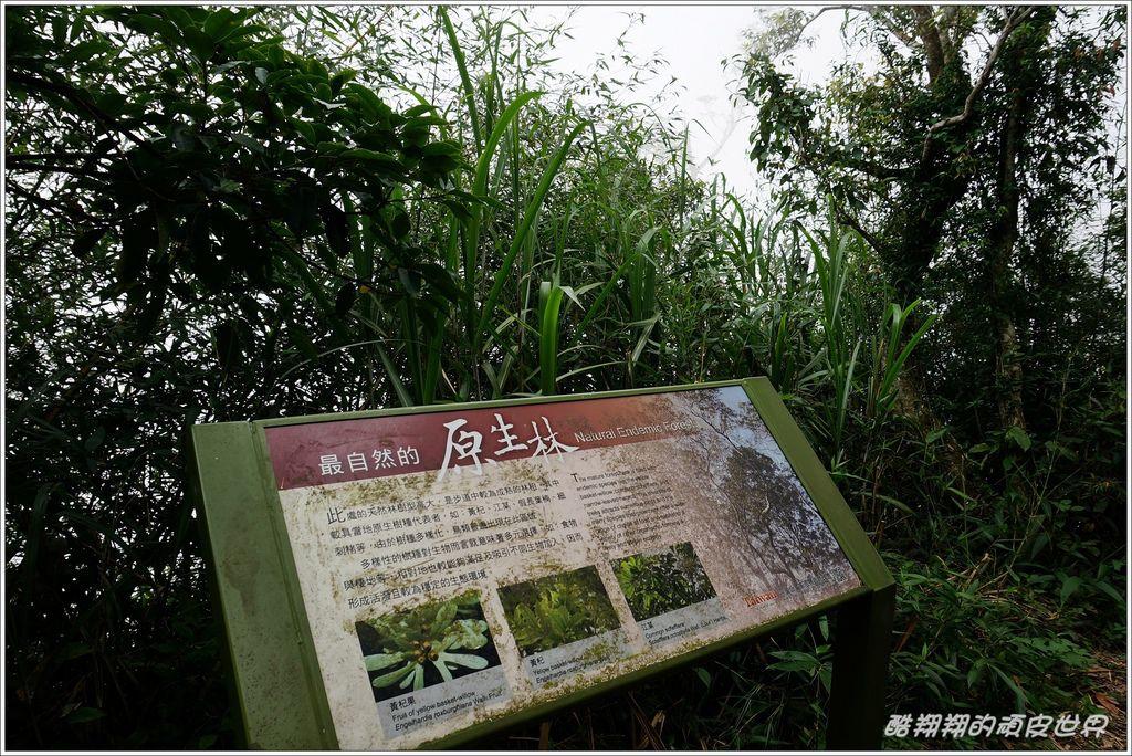 二延平步道-09.JPG