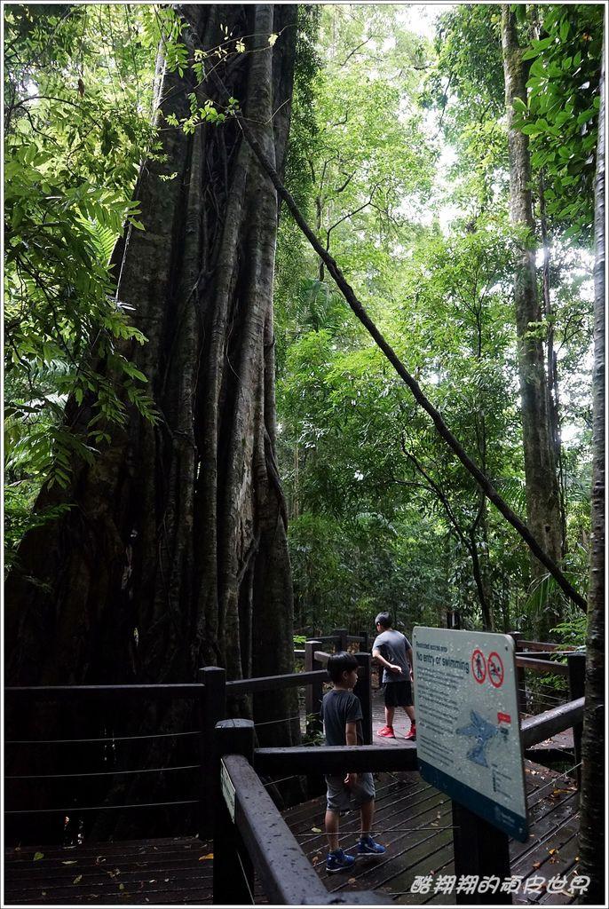 自然橋-05.JPG