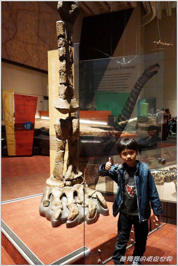 昆士蘭博物館-08.JPG