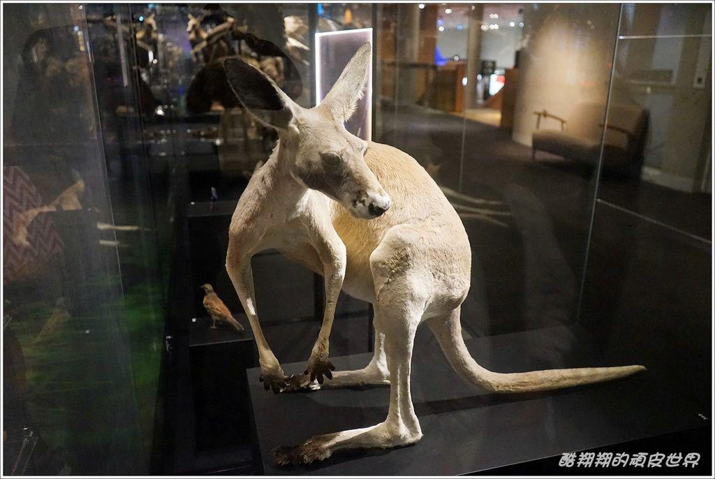 昆士蘭博物館-10.JPG
