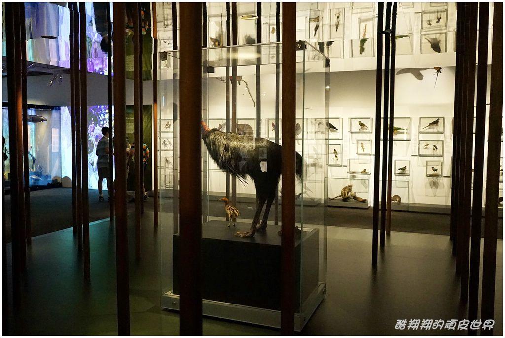 昆士蘭博物館-11.JPG