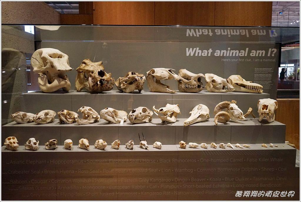 昆士蘭博物館-13.JPG