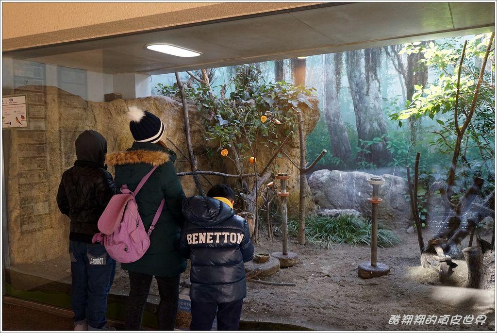 上野動物園-03.JPG