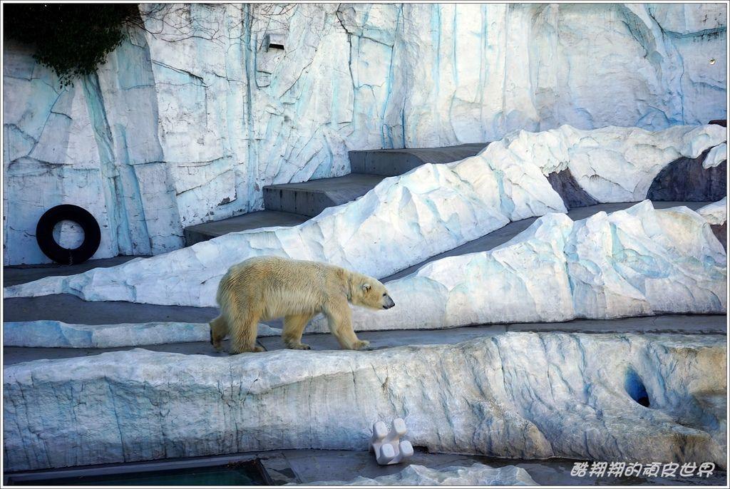 上野動物園-09.JPG