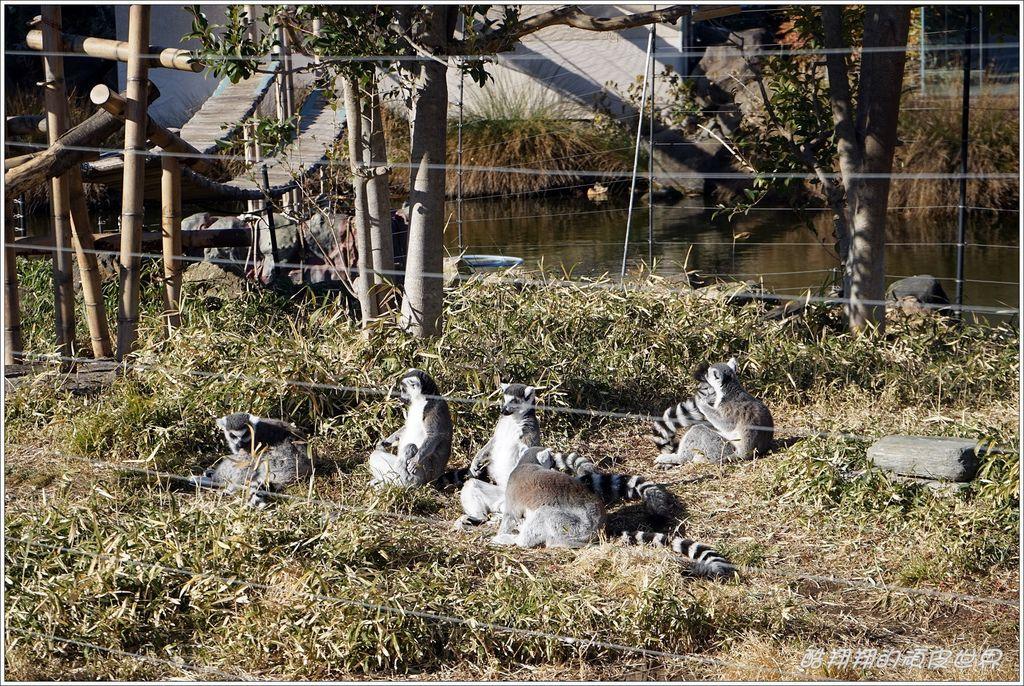 上野動物園-28.JPG