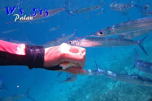 AIMG_9052帛琉.JPG