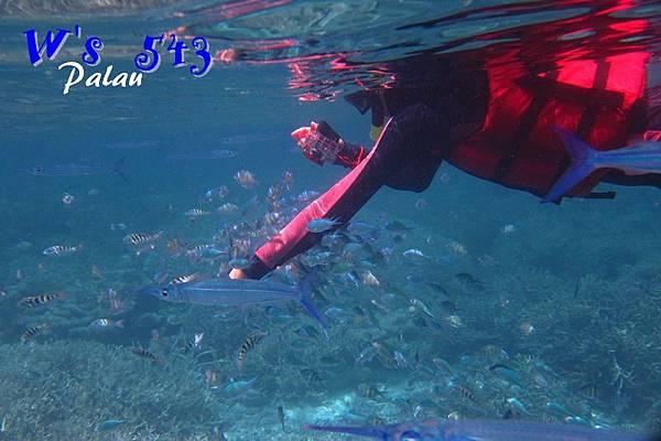 AIMG_9077帛琉.JPG