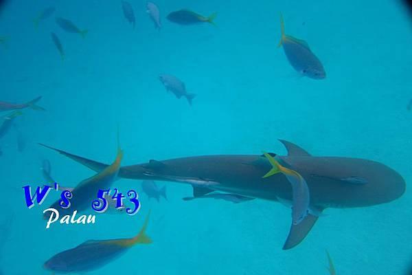 AIMG_9629帛琉.JPG