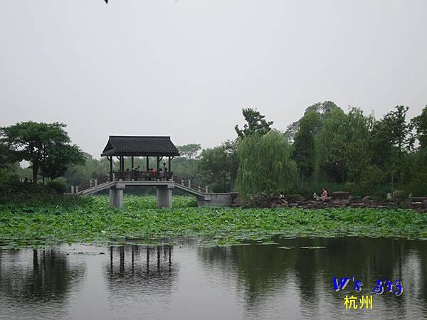 IMG_5315杭州西溪