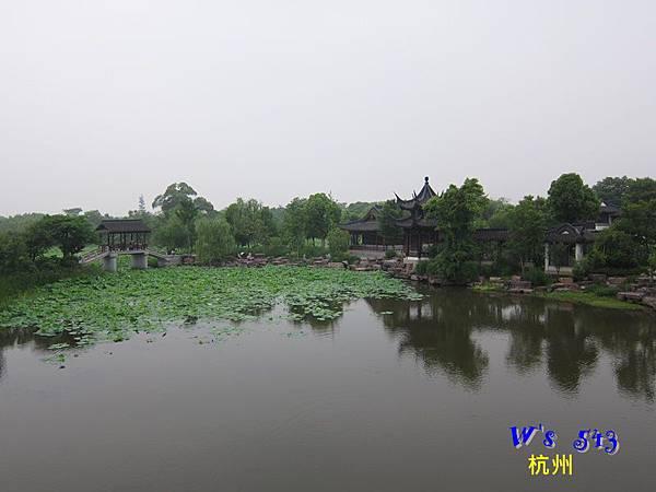 IMG_5318杭州西溪