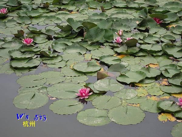 IMG_5324杭州西溪