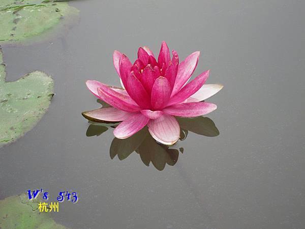 IMG_5325杭州西溪