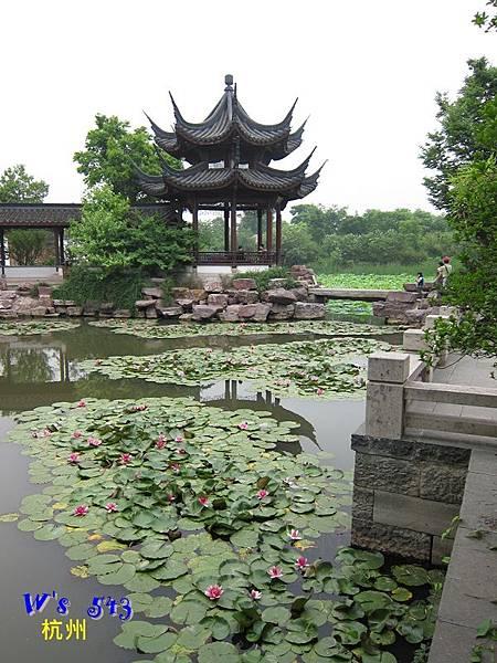 IMG_5329杭州西溪