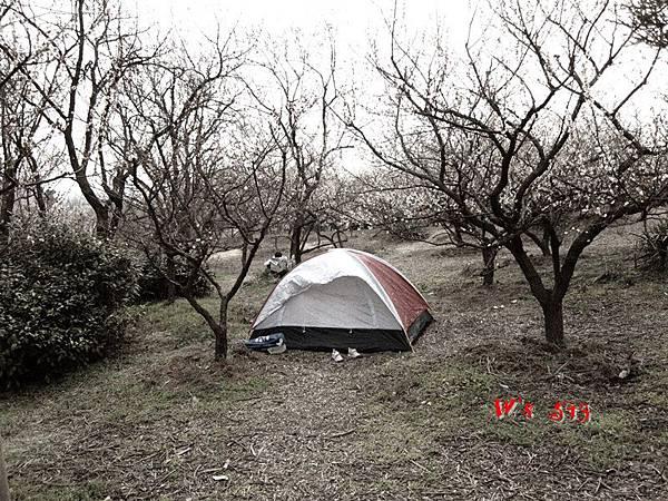 南京梅花山IMG_2837梅花季