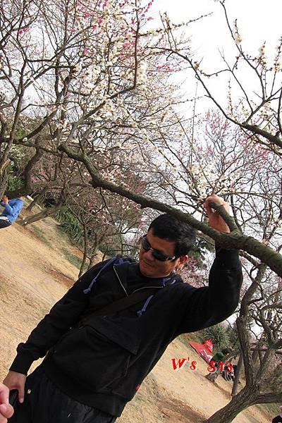 南京梅花山IMG_2851梅花季
