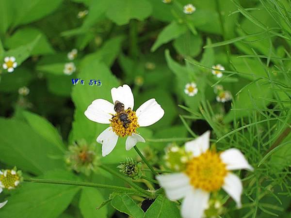 西湖渡假村IMG_0829苗栗