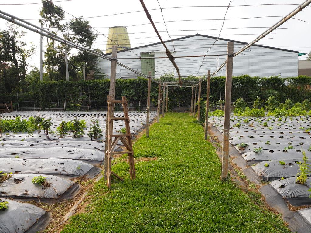 菜園2.JPG