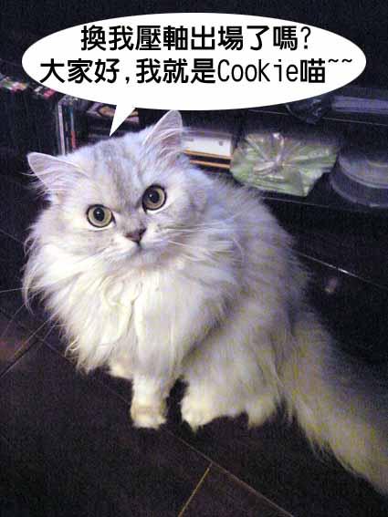 貓2.jpg