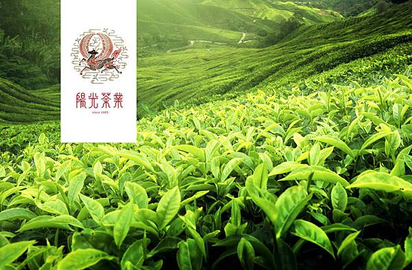 品牌-視覺設計-logo設計-包裝設計-台中-設計-推薦-陽光茶業-www.holycow.com.tw-06