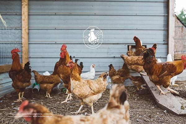 雲嶺鮮雞-滴雞精-農產品品牌設計-品牌規劃-品牌改造-設計推薦-02-1.jpg