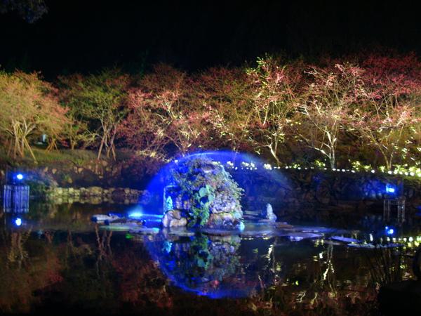 光櫻-九族文化村