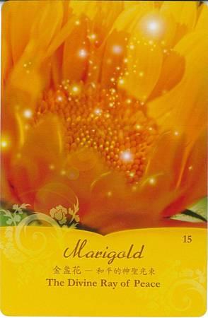 15金盞花/和平的神聖光束.jpg