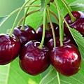 cherry-167341_640.jpg