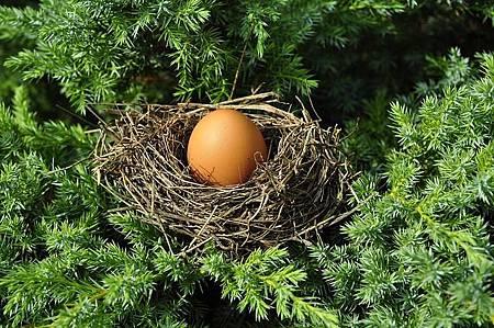 egg-1600890_640.jpg