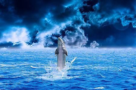 dolphin-1184251_640.jpg
