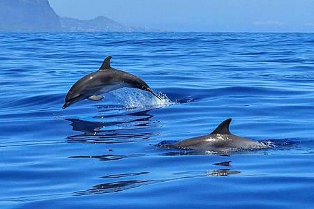 dolphin-2691864_640 (1).jpg