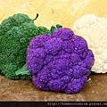 broccoli三色