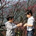 2014 帥兄弟櫻花道走春