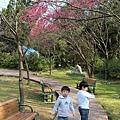 孩子在春天的櫻花裡