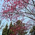 陽明山透露的春天