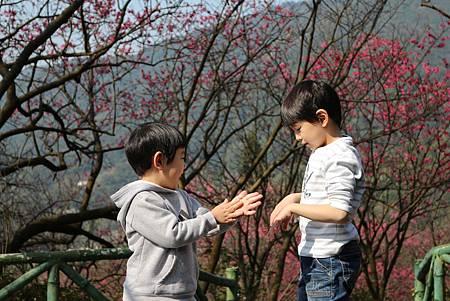 春天的訊息就在綻放的櫻花裡