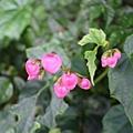 花 .jpg