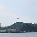基隆港與鷹.jpg