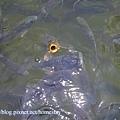 水池裡的魚.jpg