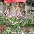 怡園老樹底下的花.jpg