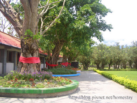 怡園老樹1.jpg